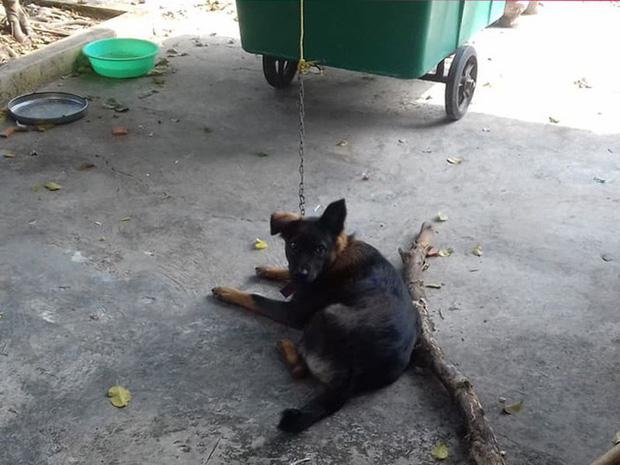 Hy hữu: Chú chó bị 2 gia đình tranh chấp quyền nuôi dưỡng, tăng cân vù vù khi bị 'tạm giữ' tại trụ sở công an - Ảnh 1