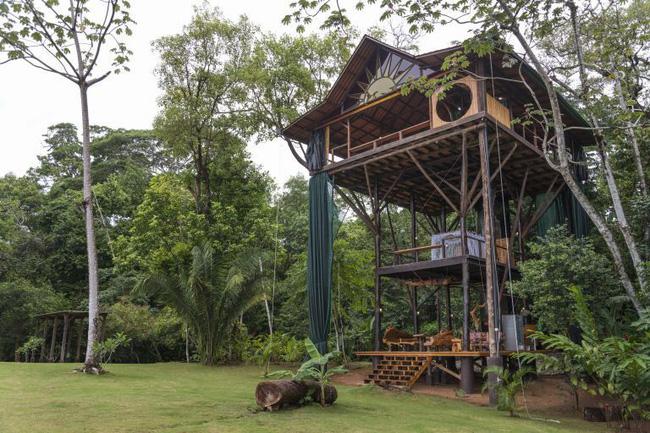 Những ngôi nhà trên cây tuyệt đẹp khiến bạn mộng mơ đến một cuộc sống chan hòa bên thiên nhiên - Ảnh 6