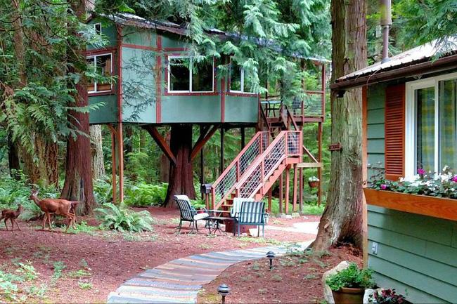 Những ngôi nhà trên cây tuyệt đẹp khiến bạn mộng mơ đến một cuộc sống chan hòa bên thiên nhiên - Ảnh 8