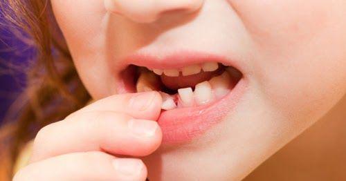 Trẻ thay răng đừng vội vứt đi, bởi chúng sẽ cứu mạng sống của con khi trưởng thành - Ảnh 1