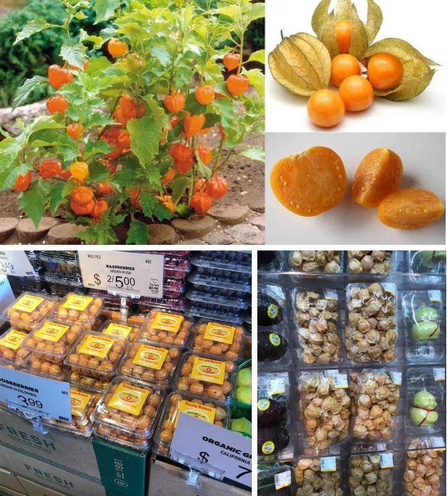 Đây là loại quả mà người Việt chỉ coi là cỏ dại, sang Nhật được tôn như 'thảo dược quý' chữa đủ thứ bệnh, bán giá 700k/kg vẫn cháy hàng - Ảnh 1
