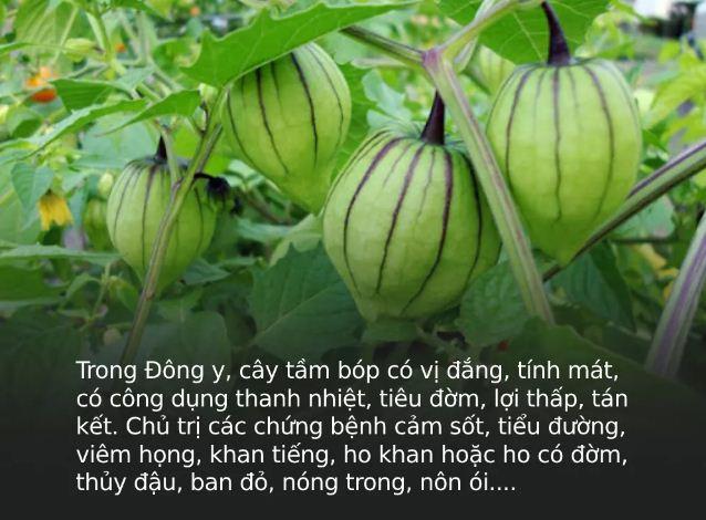 Đây là loại quả mà người Việt chỉ coi là cỏ dại, sang Nhật được tôn như 'thảo dược quý' chữa đủ thứ bệnh, bán giá 700k/kg vẫn cháy hàng - Ảnh 2