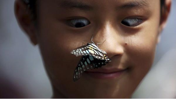 Giải mã điềm báo khi bướm đen bay quanh người  - Ảnh 5