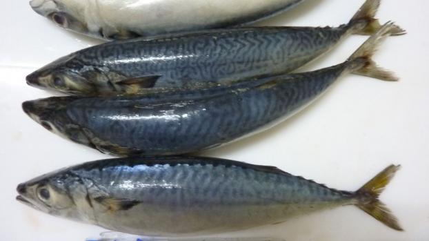 Tối nay ăn gì: Cách làm cá nục kho tiêu gừng nhanh, không tanh, ngon ngất ngây - Ảnh 1