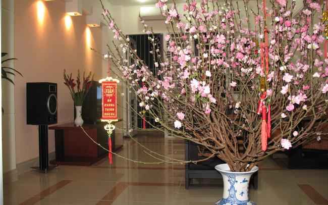Chuyên gia phong thủy tiết lộ cách chọn và vị trí đặt cây cảnh trong ngày Tết để gia đình yên ấm, may mắn quanh năm - Ảnh 1