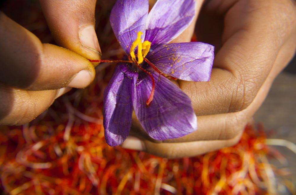 Nhụy hoa nghệ tây là sản phẩm đắt đỏ, cần lựa chọn kỹ tránh mua phải hàng giả