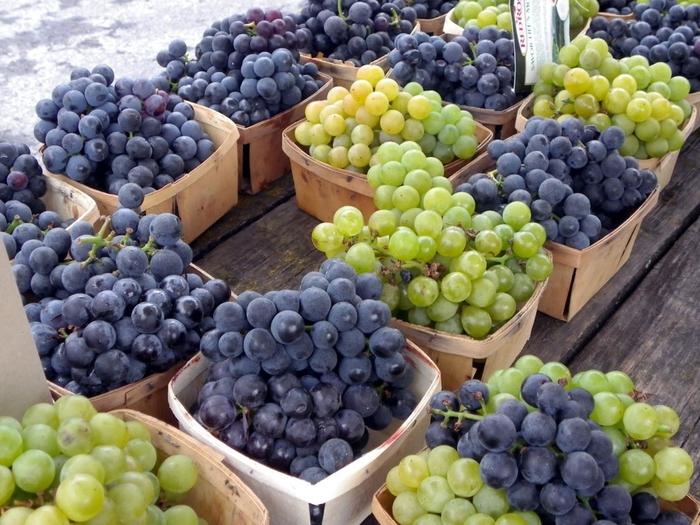 8 loại quả quen thuộc là thần dược nếu ăn vào buổi sáng nhưng ăn buổi tối lại là độc dược - Ảnh 2