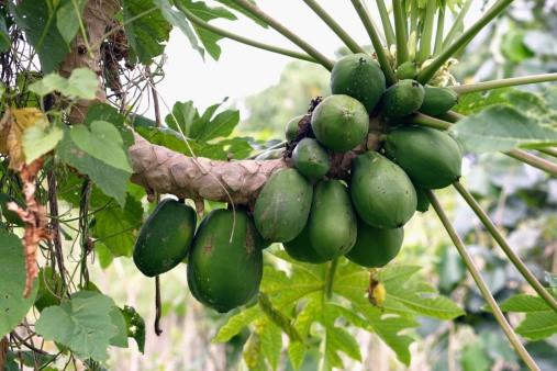 6 loại trái cây bà bầu cần tránh  - Ảnh 1