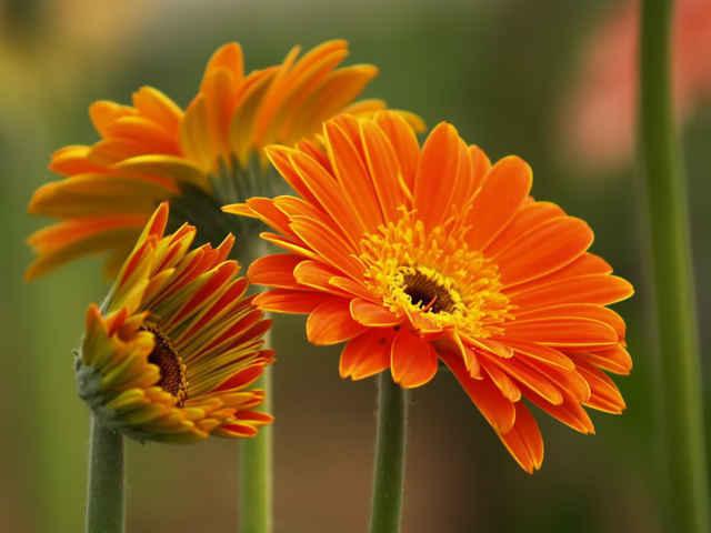 Hãy đặt ngay loài hoa này lên bàn thờ ngày Tết để cả năm bạc tiền dư dả, phúc lộc ngập nhà, xui xẻo tránh xa - Ảnh 3