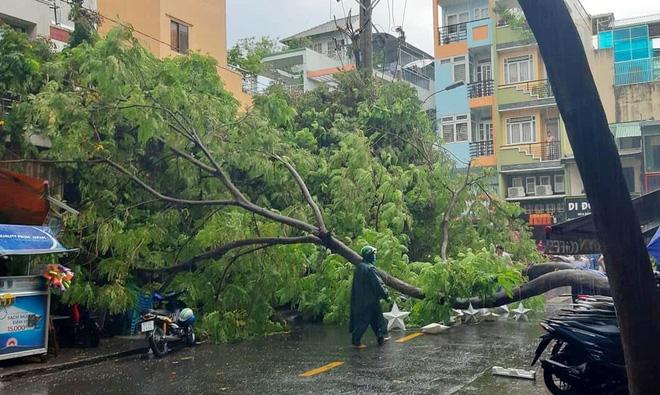 Cây xanh bật gốc đè bẹp xe máy trong cơn mưa lớn ở Sài Gòn, may mắn không có ai bị thương - Ảnh 1