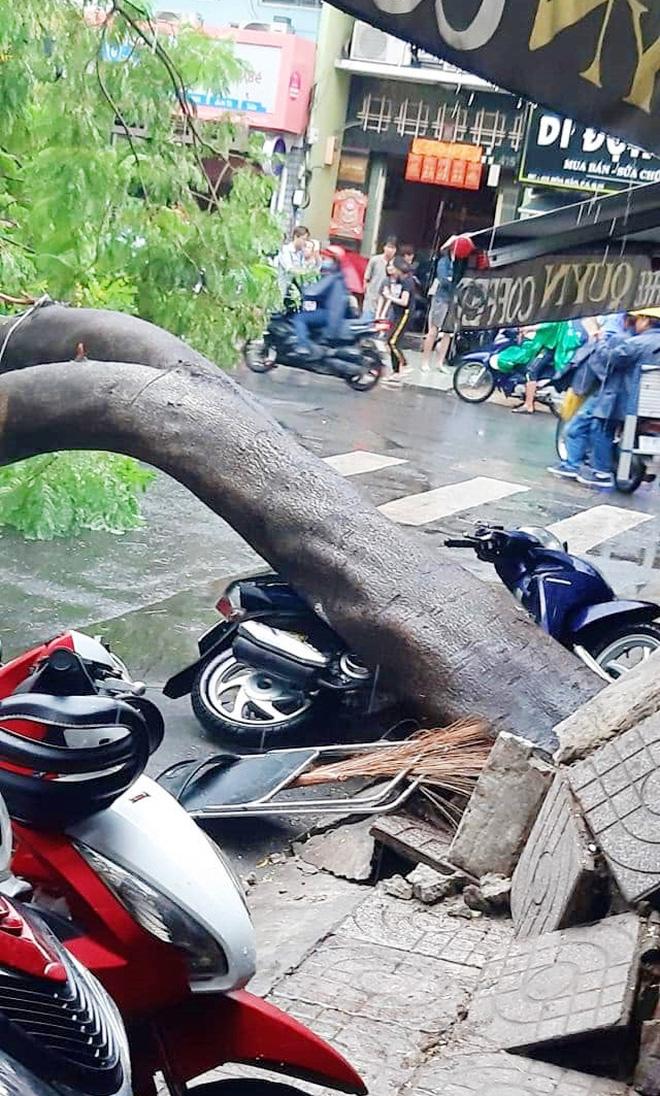 Cây xanh bật gốc đè bẹp xe máy trong cơn mưa lớn ở Sài Gòn, may mắn không có ai bị thương - Ảnh 2