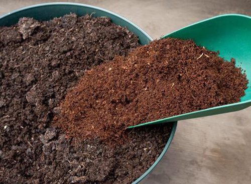 Cách trồng cà pháo trong thùng xốp nhanh thu hoạch, tha hồ làm cà muối chua 'giải ngán' - Ảnh 1