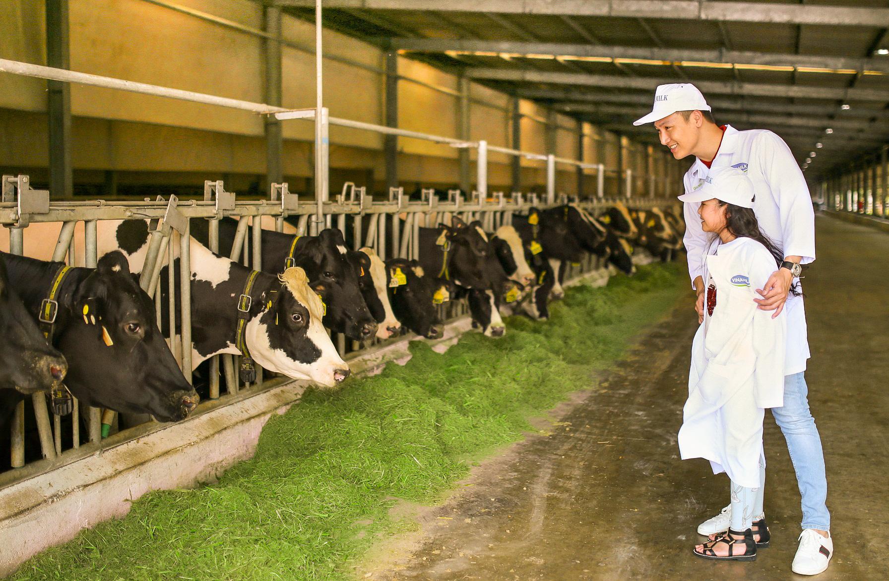 Tận mắt thấy những cô bò ở 'Resort' góp công vào ly sữa học đường - Ảnh 4