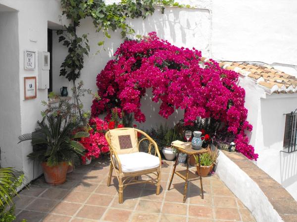 Cách trồng hoa giấy leo ra hoa đẹp quanh năm cho nhà trong phố - Ảnh 1