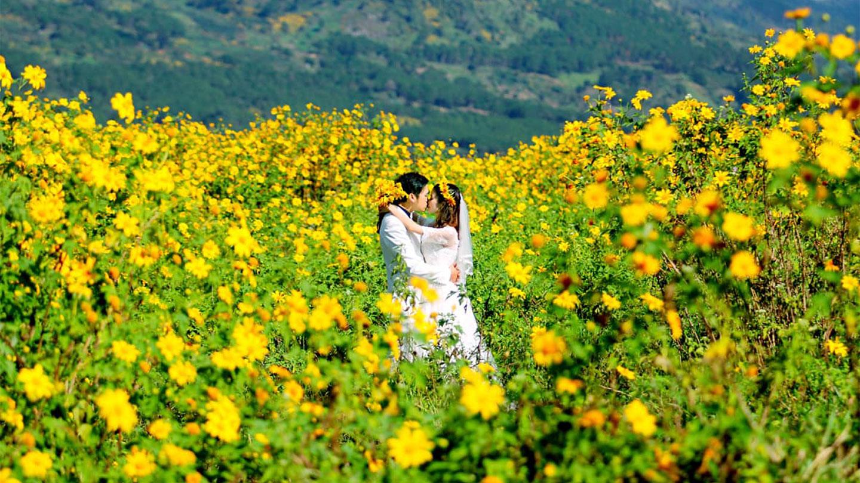 Hoa dã quỳ tượng trưng cho tình yêu giản dị với sức sống mãnh liệt,