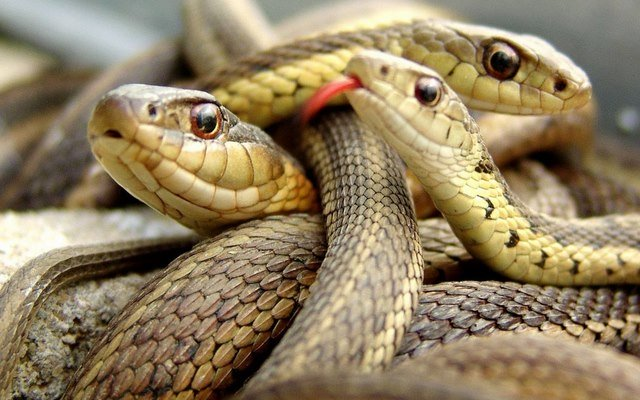 Nằm mơ thấy 3 con rắn đánh con gì? Giải mã giấc mơ thấy 3 con rắn