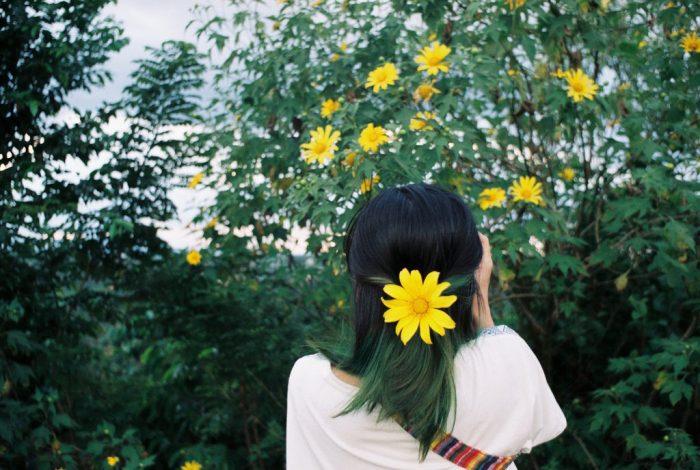 Sự tích về loài hoa dã quỳ là một câu chuyện tình yêu buồn