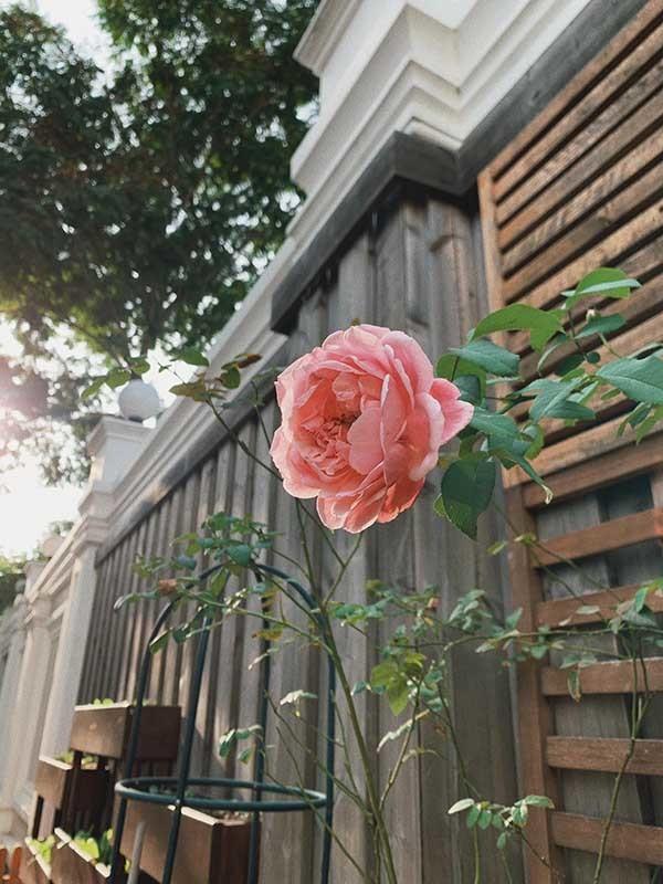 Tăng Thanh Hà khoe khéo biệt thự triệu đô ngập tràn sắc hoa đón Tết - Ảnh 6