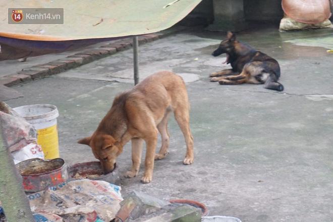 Chủ đàn chó cắn bé trai 7 tuổi tử vong lao ra khỏi nhà uy hiếp, chửi bới phóng viên - Ảnh 3