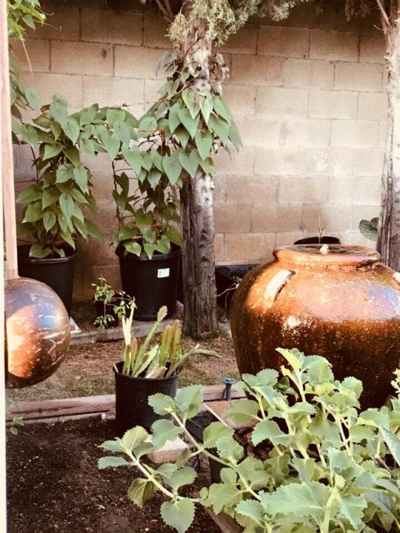 Hé lộ không gian nhà vườn giản dị của ca sĩ Hương Lan ở Mỹ - Ảnh 8