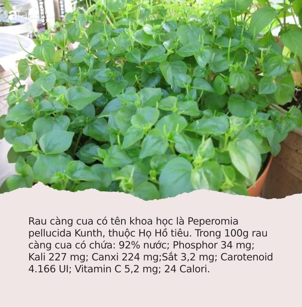 Có loại rau đắt hơn thịt, châu Âu, Trung Quốc tôn thảo dược quý chữa bệnh cực tốt, người Việt chỉ coi là cỏ dại - Ảnh 1