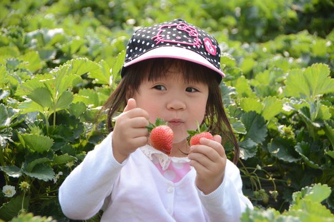 Cho trẻ ăn dâu tây có lợi ích gì mà nữ Youtuber Quỳnh Trần JP và bé Sa ăn ngon lành đến vậy? - Ảnh 1