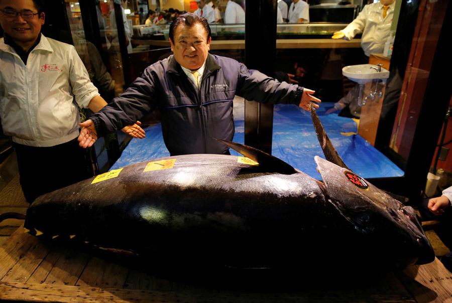 Cận cảnh con cá ngừ 'khủng', giá hơn 71 tỉ đồng - Ảnh 2