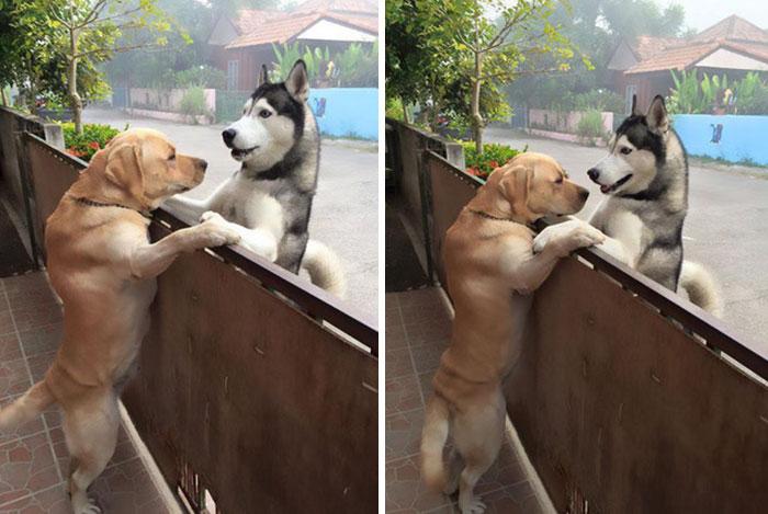 Chó chạy vào nhà <a target='_blank' href='https://www.phunuvagiadinh.vn/xong-dat-dau-nam.topic'>xông đất đầu năm</a> là dấu hiệu tốt hay xấu?