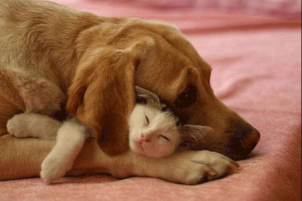 Mèo đến thì khó, chó đến thì sang