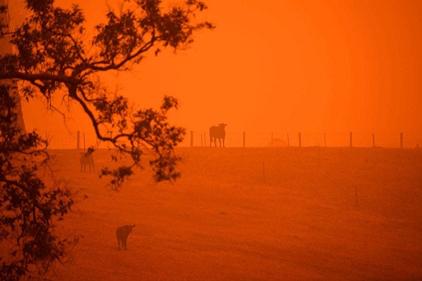 Bầu trời nước Úc đỏ như máu trong ngày thảm họa cháy rừng - Ảnh 1