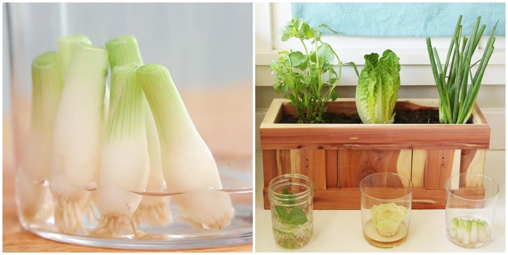 'Tái sinh' rau củ từ những phần bỏ đi bằng cách trồng đơn giản này, đảm bảo ăn cả năm không hết - Ảnh 1