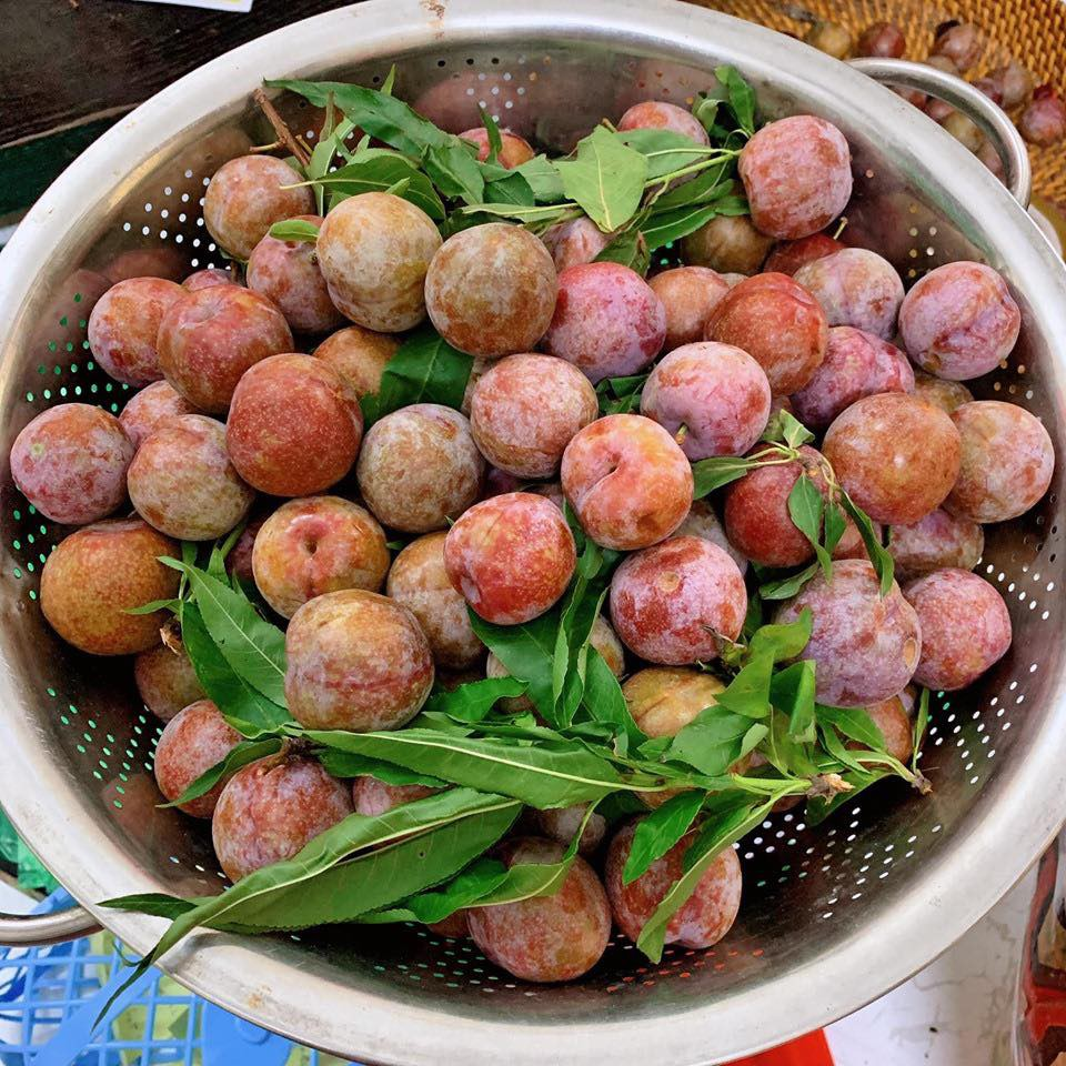 Học ngay Hot Facebooker Tô Hưng Giang cách chọn mận ngon ngọt dày cùi cực chuẩn cho ngày Tết Đoan Ngọ - Ảnh 6