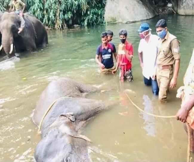 Đã bắt giữ được nghi phạm trong vụ voi mẹ mang thai chết tức tưởi vì ăn phải dứa nhồi pháo nổ - Ảnh 1