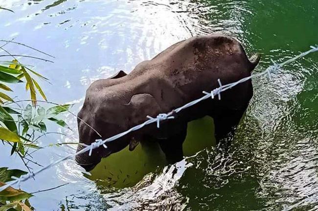 Đã bắt giữ được nghi phạm trong vụ voi mẹ mang thai chết tức tưởi vì ăn phải dứa nhồi pháo nổ - Ảnh 2