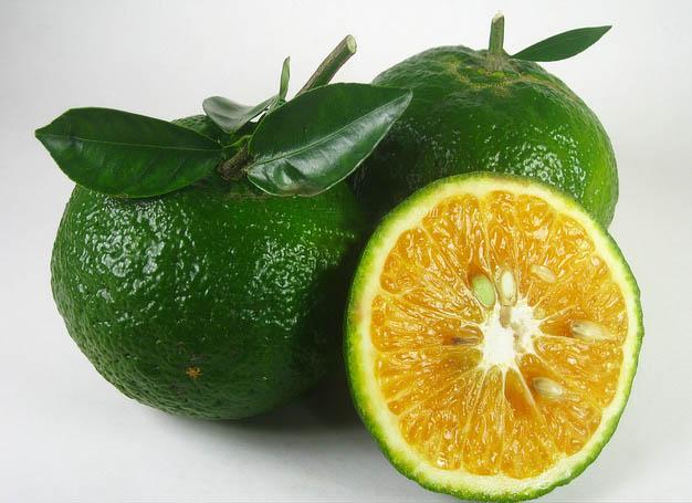 Bị vẹo cổ khi ngủ dậy, hãy tìm 1 trái cam và làm theo cách này để giảm đau nhanh chóng - Ảnh 3