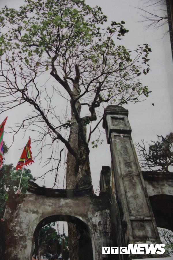 Sét đánh bật mộ và kỳ dị người đàn bà thả cả tấn rắn khổng lồ nghi trấn yểm núi Ba Vì - Ảnh 2