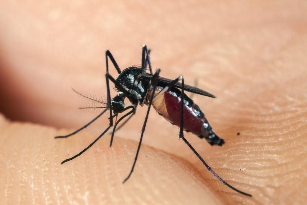 Mùa mưa đến, đừng để cả nhà bị muỗi đốt kẻo mắc những căn bệnh nguy hiểm này - Ảnh 1