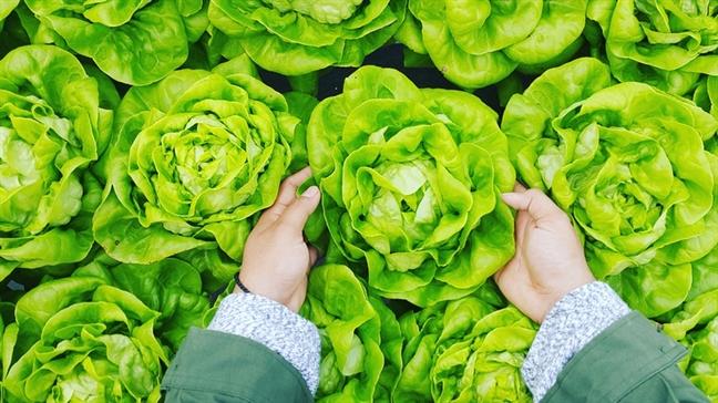 7 thực phẩm càng ăn nhiều càng giúp giảm cân - Ảnh 3