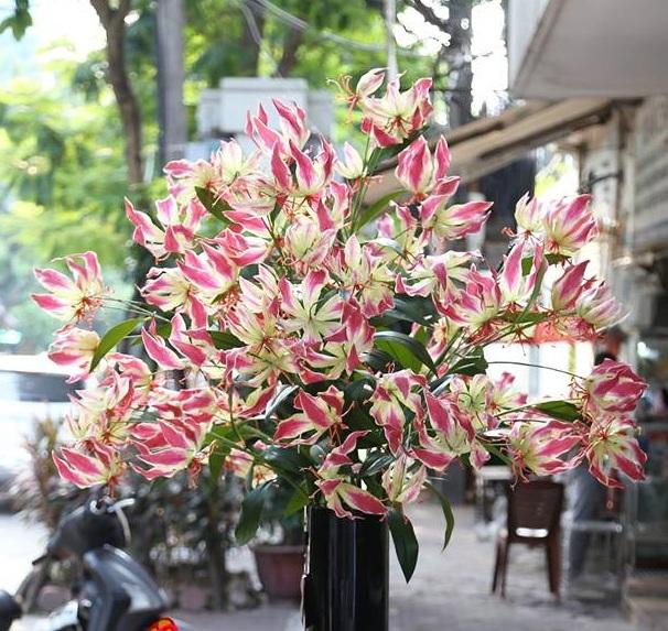 Loài hoa nhập dịp Tết khiến chị em phát cuồng có thể... giết người - Ảnh 1