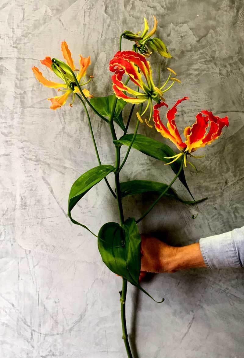 Loài hoa nhập dịp Tết khiến chị em phát cuồng có thể... giết người - Ảnh 2