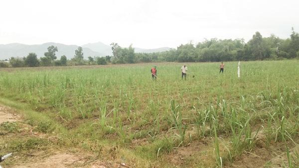 Khánh Hòa giải phóng mặt bằng cho dự án cao tốc 120.000 tỷ - Ảnh 3