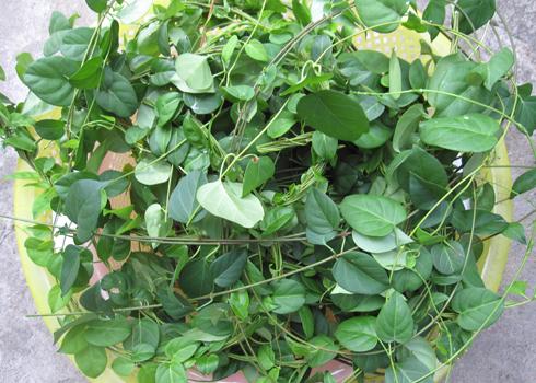 Ăn 10 loại lá này, mỡ cứng đầu đến mấy cũng bay đi vèo vèo một đi không trở lại - Ảnh 3