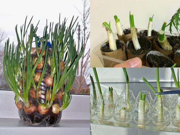 Cách trồng hành lá đơn giản, tiết kiệm tại nhà bằng những vật dụng bỏ đi