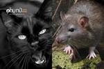 Nếu các con vật này bỗng dưng xuất hiện trong nhà bạn, hãy cẩn thận
