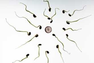 Những bí quyết giúp bạn cải thiện lượng tinh trùng cho chồng