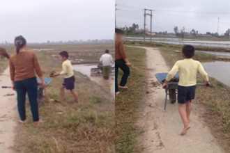 Clip gây tranh cãi: Không thích đi học, cậu bé bị mẹ phạt ra đồng bốc phân trâu bò