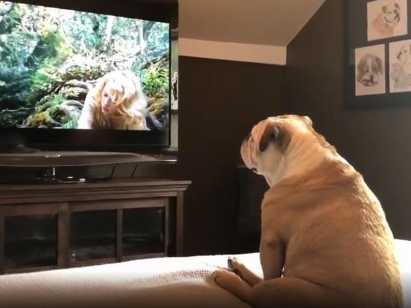 Đang xem phim thì thấy nữ chính bị quái vật bắt, chú chó 'bức xúc' hài té ghế