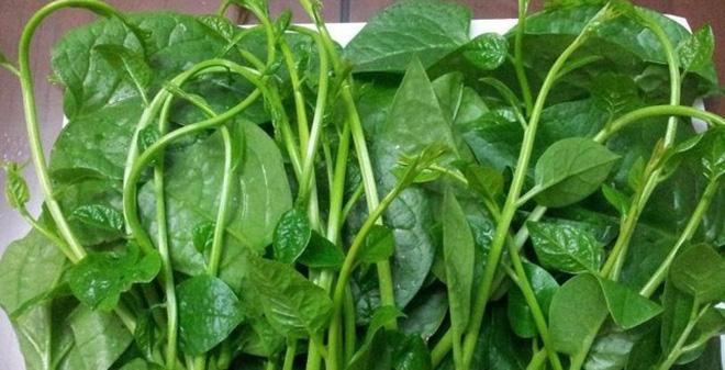 Cách chữa mụn bằng rau mồng tơi nghiền với muối đắp mặt cực hiệu quả - Ảnh 5
