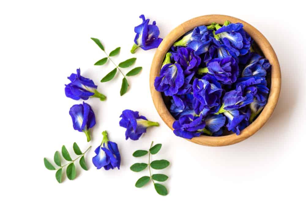 Bí quyết làm đẹp bằng hoa đậu biếc từ thiên nhiên - Ảnh 1