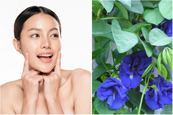 Bí quyết làm đẹp bằng hoa đậu biếc từ thiên nhiên - Ảnh 9